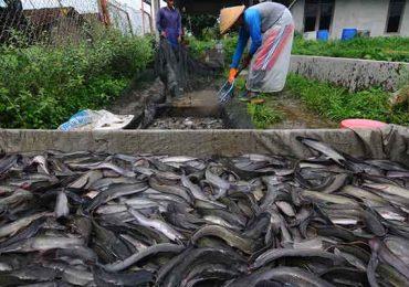 6 Cara Budidaya Ikan Lele Untuk Pemula : Perhatikan Tempat dan Modal