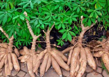15 Makanan dari Singkong Lezat & Siap Menggoyang Lidah